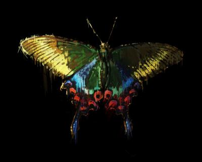 Maia Zeidan « la force du papillon »